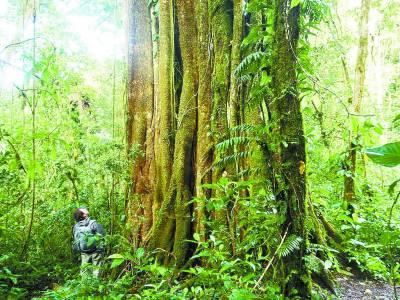 <b>保护最完好的哥斯达黎加绿山</b>