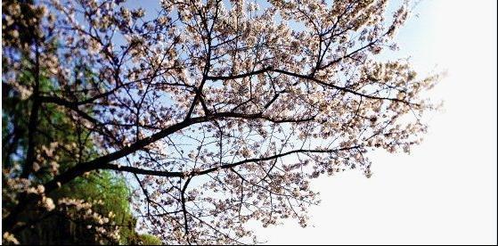 春满江南:踏青攻略之浙江篇