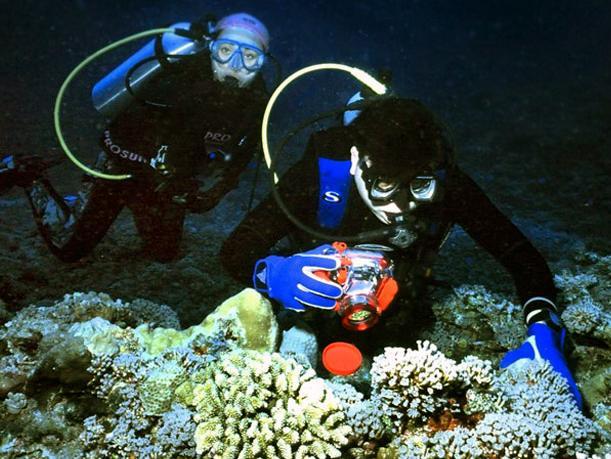 西沙群岛潜水课程介绍