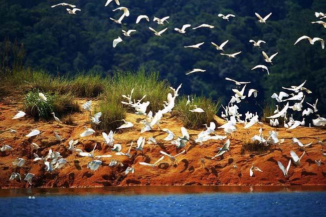 流溪河国家森林公园旅游景点介绍图片