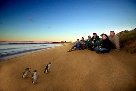 景区景点 大洋洲旅游景点 澳大利亚旅游景点 墨尔本旅游景点 企鹅岛