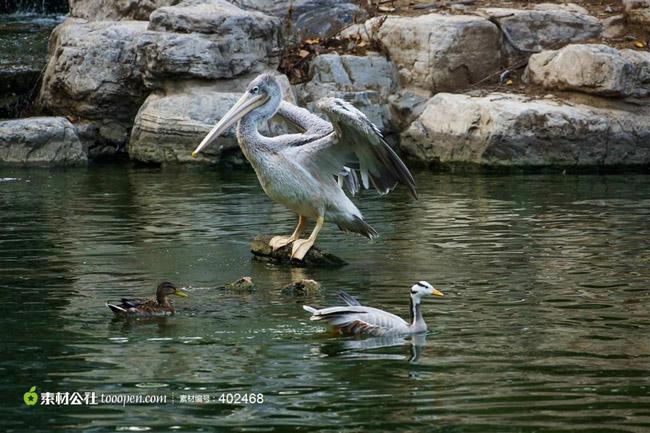 南宁西郊动物园:概况_附近美食/交通/购物/娱乐/注意