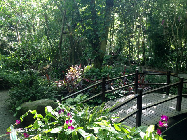 湛江南亚热带植物园旅游景点介绍