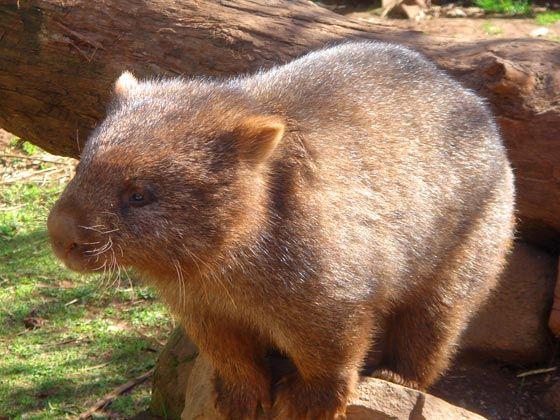 游客可以在动物园内乘坐观光汽车,并亲自喂食小动物,感受人与自然亲密