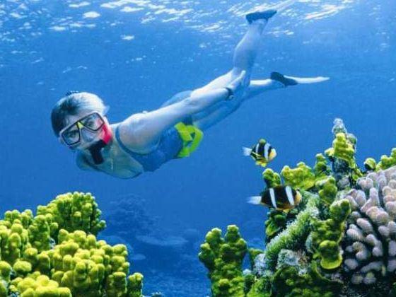 树叶画深海世界
