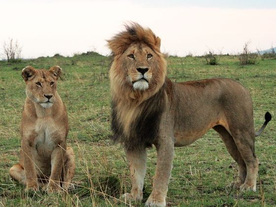 动物大迁徙--肯尼亚10日长焦之旅