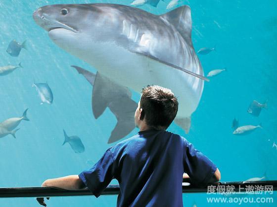 国航直飞 澳大利亚8日乐享海豚岛阳光假期 遨游推荐 领队推荐 产品