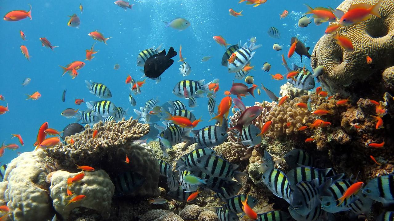 太平洋海底世界1日游