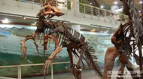 动物黄河象的骨架