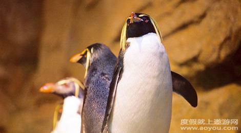 在极地海洋区中展示了大量珍稀极地动物与海洋生物