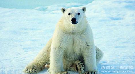 青岛极地海洋世界内拥有36个展馆