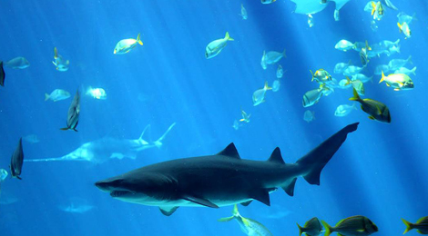 壁纸 动物 海底 海底世界 海洋馆 水族馆 鱼 鱼类 470_260